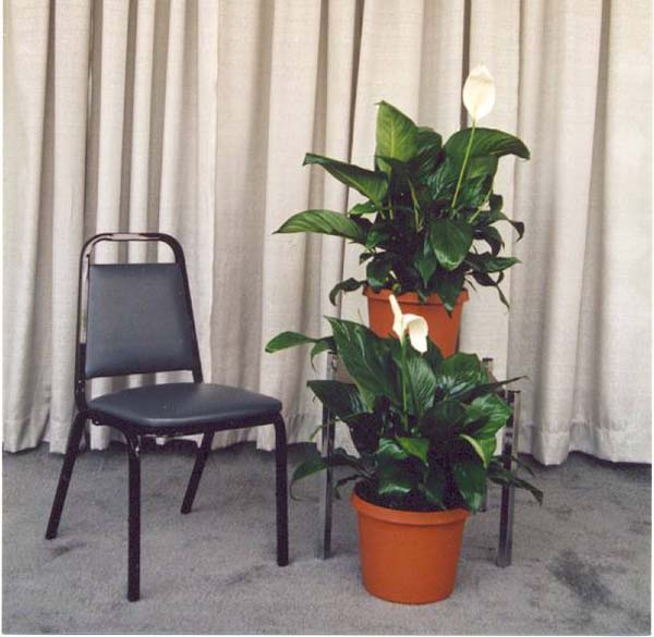 side chair0001